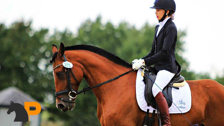 آشنایی با روحیات اسب
