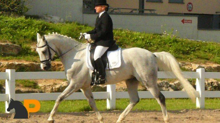 اسب نژاد شاگیا