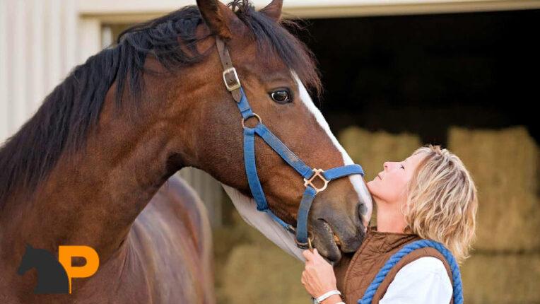 اسب خود را درک کنید
