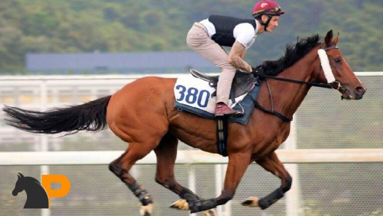 شرطهای رایج اسب سواری، شرط بندی اسب سواری