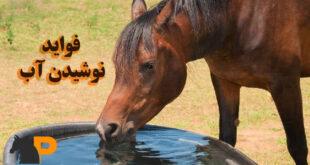 سلامت اسب و نوشیدن آب