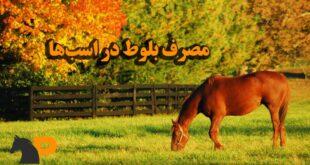 مصرف بلوط در اسبها
