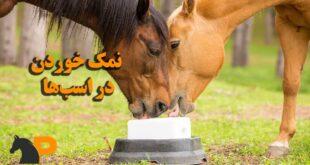 نمک خوردن در اسبها