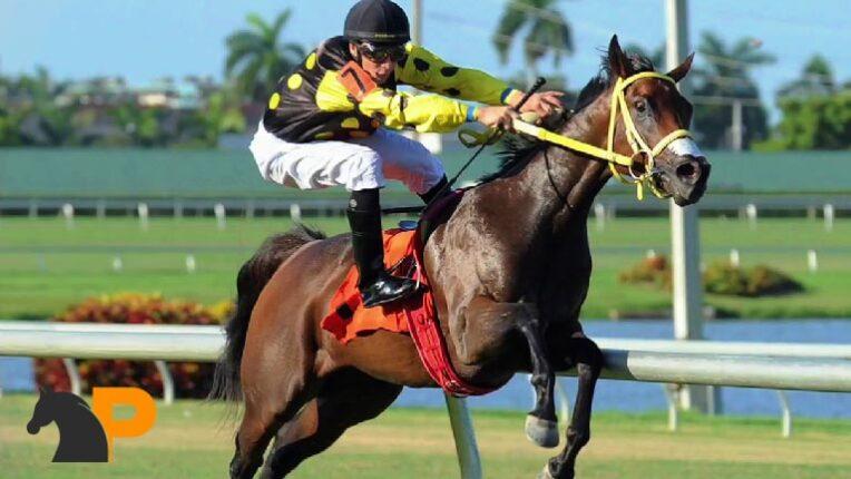 Tricast در شرط بندی اسب سواری