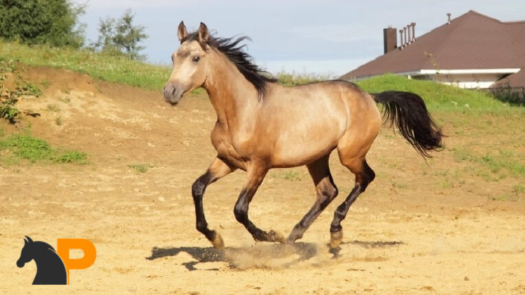 رنگ بندی اسبها