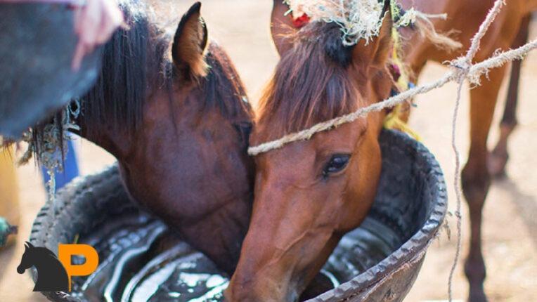 تغذیه مناسب اسب