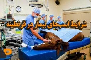 اسبهای بیمار در قرنطینه