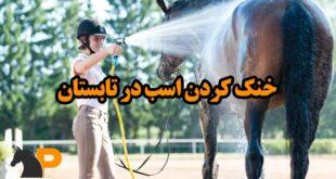 خنک کردن اسب در تابستان