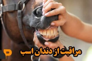 دندان اسب