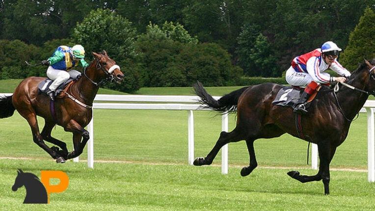 آموزش اسب سواری | منظور از چهارنعل رفتن چیست؟