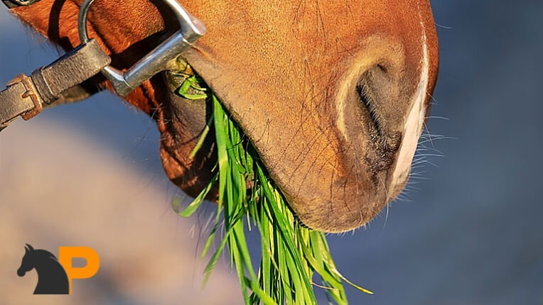 علائم اصلی سلامت اسب