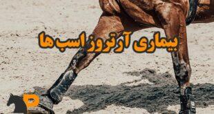 بیماری آرتروز اسبها
