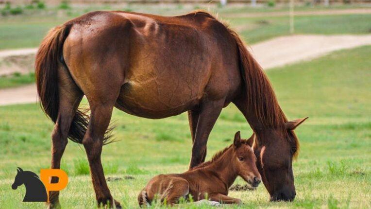 اسب های باردار