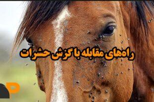 گزش حشرات و آسیب به اسب