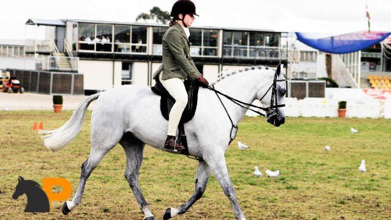ارتباط سوارکار با اسب