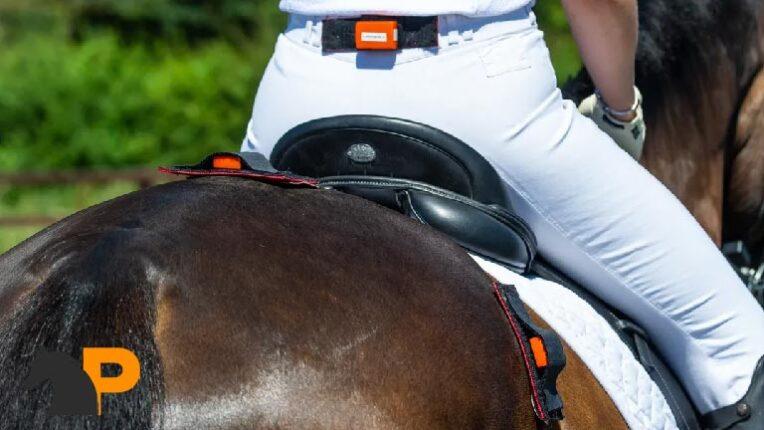 درد کمر اسبهای ورزشی