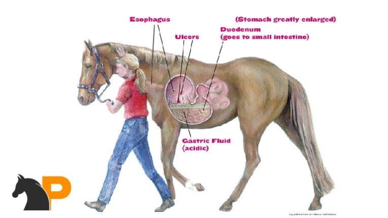درد شکم اسب
