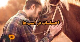 احساسات اسبها