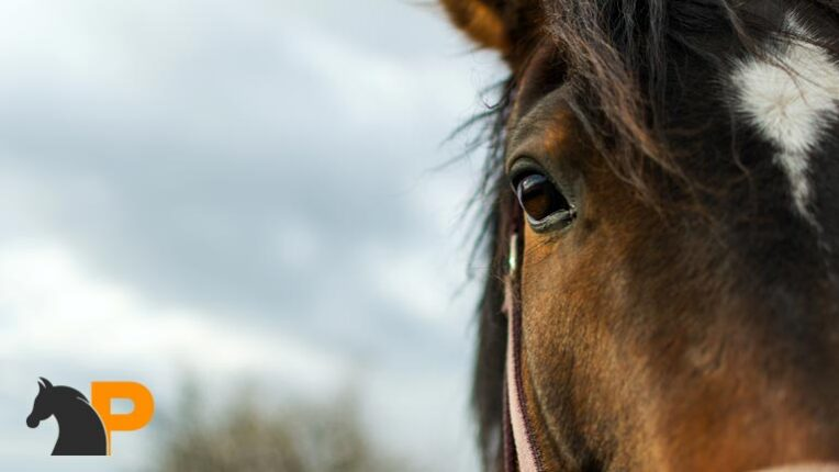 حرف زدن اسبها