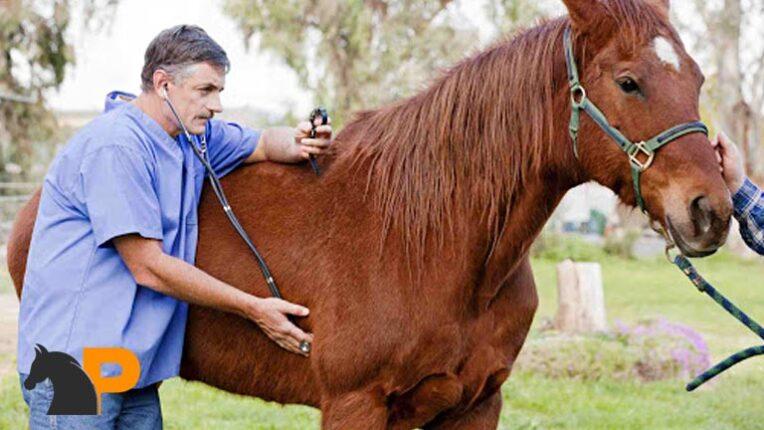گرفتن نبض اسب