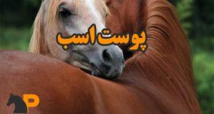 پوست اسب