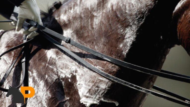 کنترل دمای بدن اسب