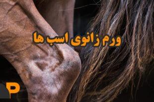 ورم استخوان پای اسب