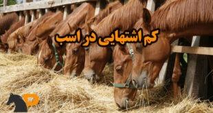 کم اشتهایی در اسب